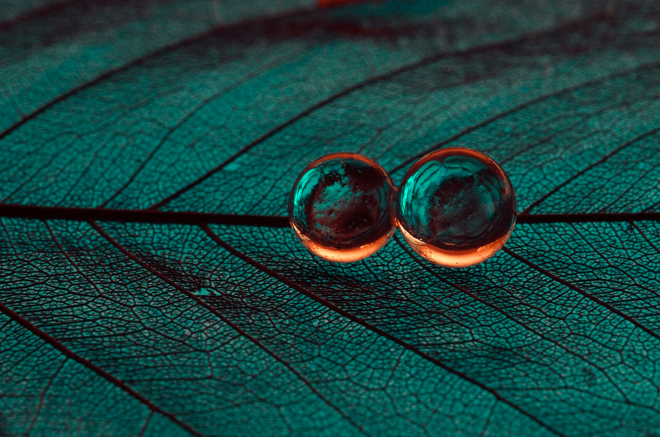 Creative Macro Photography At Home With Hydrogel Beads And